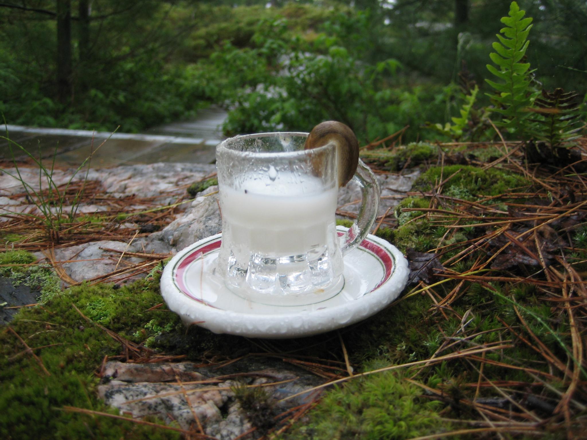 Fairies and Milk & Honey | PLANET DOVE'S JOURNAL